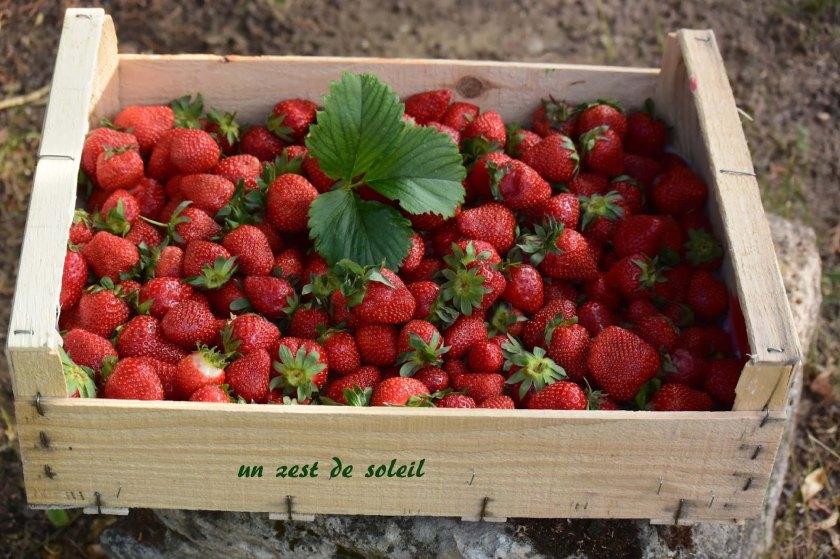 confiturede fraises.jpg12